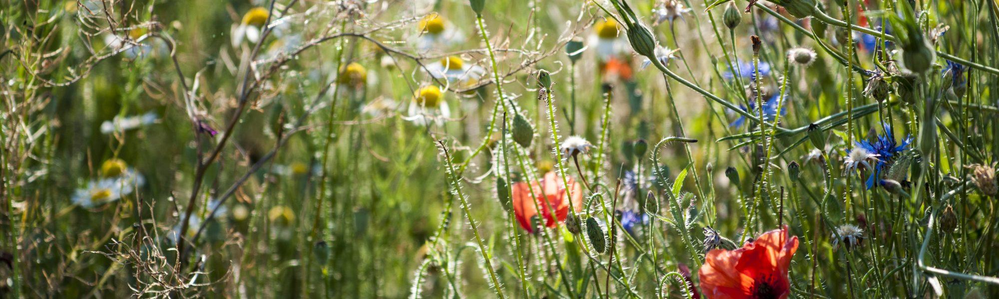Freiland-Philosophie Biodiversität