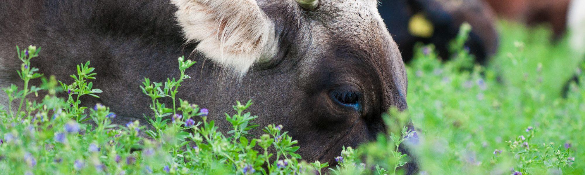Freiland-Tagung Freilandhaltung Rind Mutterkuhhaltung Bio